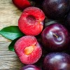 Plump for Plums