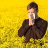 The Bees Sneeze